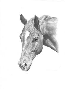 kopp horse 8-14-08_0001